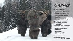 Krampus in Austria: Krampus run 2019 Videos, Austria, Lion Sculpture, Statue, Youtube, Video Production, Sheepskin Rug, Wood Carvings, Sculpture