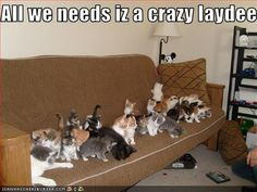 I love cats but that's a little crazy Cute Funny Animals, Cute Cats, Funny Cats, Cats Humor, Silly Cats, Funny Humor, Funny Quotes, Crazy Cat Lady, Crazy Cats