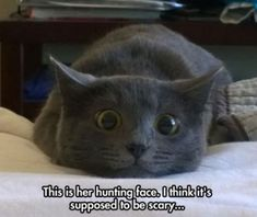 Hunting face