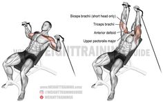 A compound exercise. Synergists: Anterior Deltoid and Triceps Brachii. Dynamic stabilizer: Biceps Brachii (short head only). Bench Press Weights, Bench Press Workout, Best Chest Workout, Chest Workouts, Chest Exercises, Chest Muscles, Big Muscles, Cable Workout, Weight Training Programs