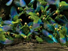 Colorful birds. Beautiful sight.
