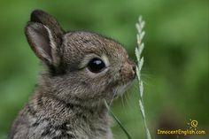 Baby bunny!!!!!!!!!!!!!!