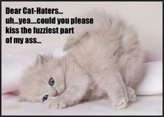 To the cat haters!