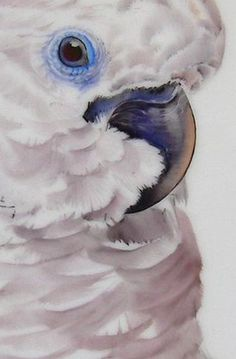 Bright White by Andreas Knobl, Germany - Firebrickart Watercolor Bird, Watercolor Paintings, Acrylic Painting Inspiration, Scratchboard Art, Bird Crafts, Australian Animals, China Painting, Skull Art, Animal Paintings