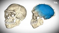 The Ever-Evolving Human Evolution Story https://vimeo.com/230839524  Read more: https://www.icr.org/article/10187  #Evolution #Science