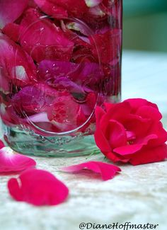 How To Make Rose Water And What to Do With It