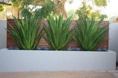 architectural plants - Google Search