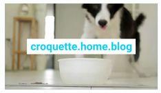 Buffer, Important, Attention, Breakfast, Blog, Dogs, Morning Coffee, Morning Breakfast
