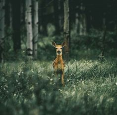 When I have an encounter like this: walking quietly through the woods, and suddenly facing a beautiful deer, both of us standing still and staring for a while and then moving on. It always fills me with such happiness and love!