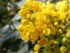 Cele mai frumoase plante care acopera solul - Case practice Plants, Sun, Lawn, Plant, Planets