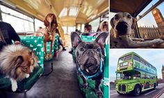 The world's first bus tour for DOGS launches in London