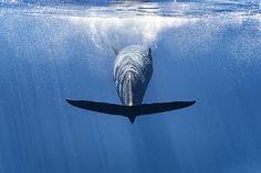 sperm whale photo Dauphin island
