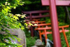 Torii Shrine Japan
