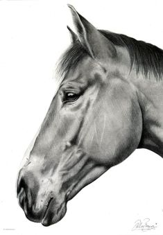 Commissioned charcoal drawing drawn by Chloé Brown. Charcoal Art, Charcoal Drawing, Chloe Brown, Brown Horse, Brown Art, Horse Drawings, Contemporary Artwork, Interesting Faces, Pet Portraits