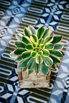 Succulents on Patterns via The Jungalow - Styled by Whitney Leigh Morris & Justina Blakeney