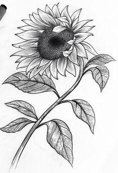 Drawing, sunflower art, sunflower tattoos, simple pencil drawings, pencil a Pencil Drawings Of Flowers, Pencil Art Drawings, Easy Drawings, Drawing Sketches, Sketches Of Flowers, Sunflower Sketches, Sunflower Drawing, Fabric Painting, Painting & Drawing