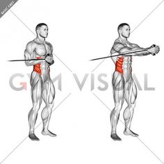 Guide for exercise of fitness and bodybuilding . Target muscles are marked in red. Initial and final steps. Weight Training Workouts, Gym Workout Tips, Workout Videos, Mens Body Types, Strength And Conditioning Workouts, Oblique Workout, Lower Back Exercises, Ab Wheel, Gym Stuff