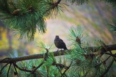 Birdie, follow and like us here and on Facebook.com/creativemoments9