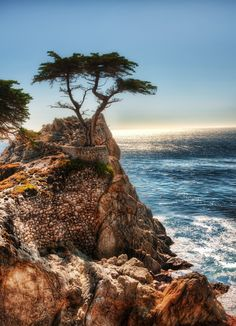California - Monterrey - Carmel by the Sea - # 6 of the 10 most famous trees in the world. The Lone Cypress Tree is over 200 years old and because its one of the most famous trees in the world, is also the official symbol of Pebble Beach and you will see it during your drive through 17-Mile Drive. The tree is perched on a rock with supporting cable around it to keep it from falling.