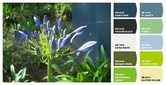 Sherwin-Williams paint colors from the Snap It button.