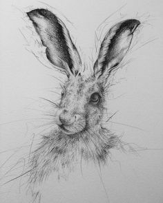 "Hare called ""Twitch"" - Art by Beverley"