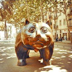 El gato de el Raval en Barcelona - Foto @mundukos