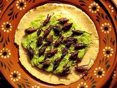 Grasshoppers, eaten in Oaxaca, Mexico   15 Strangest Foods (strange foods, bizarre foods) - ODDEE