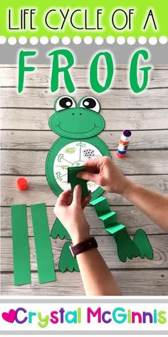 Life Cycle of a Frog Craft (Spring Craft for Kids) You are in the right place about Spring Crafts For Kids door Here we offer. Frog Crafts Preschool, Science Activities For Kids, Kindergarten Activities, Sequencing Activities, Spring Craft Preschool, Science Lesson Plans, Preschool Science, Frogs For Kids, Cycle For Kids
