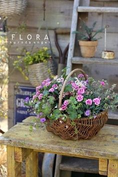 Container gardening is a fun way to add to the visual attraction of your home. You can use the terrific suggestions given here to start improving your garden or begin a new one today. Your garden is certain to bring you great satisfac Indoor Gardening Supplies, Container Gardening, Beautiful Gardens, Beautiful Flowers, Deco Floral, Natural Garden, Container Flowers, Flower Boxes, Garden Inspiration