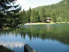 Fazzon - Lago dei Caprioli - Val di Sole - Trentino... qui, ad un'altitudine compresa tra i 1200 ed i 1500 metri, vengono coltivati i fiori: le stelle alpine, diverse specie di semper vivum, piante perenni da fiore... Questo vivaio ci permette la produzione di migliaia di esemplari di stelle alpine sempervivum, sedum e genziana..