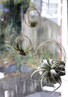 These delightful hanging ornaments are composed of concentric brass coils to support your favorite air plant! Perfect to hang on a window or wall,