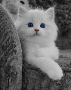 oh gosh white cats are so precious i'd name my white cat Artemis