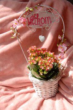 Shabby bloemenmandje ( te koop zonder het plantje) € 4,00. Check onze webwinkel of het product nog verkrijgbaar is