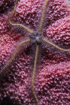 The coral reef consists of many animals including brittle stars (a type of star fish) and sponges.