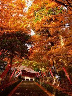 Autumn colours surrounding Gakuenji Temple in #Izumo City, Shimane  Prefecture
