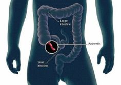 For generations the appendix was thought to have no purpose. But now,researchers say they have discovered the true function of this organ, and it is anything but redundant.
