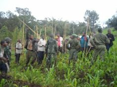 Rangers Respond to Difficult Situation Involving Buffalo and Villagers   gorilla.cd