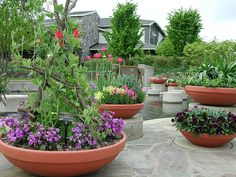 Mississippi Mud Pie: DIY Hypertufa: how to make your own planters
