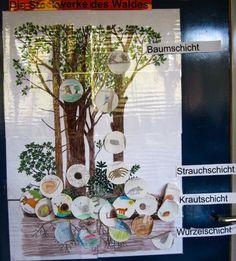 Wie versprochen zeige ich euch nun einige Ergebnisse unserer Arbeit mit den Herbst-Lapbooks.  Viele Kinder haben sich größte Mühe gegeben un... Primary Education, Primary School, Childcare Activities, Wood Book, Thing 1, Forest Animals, Science, Montessori, Homeschool