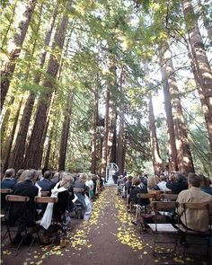 Love a wedding in the forest!