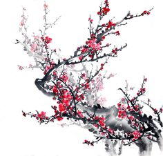 plum blossom on white background-traditional chinese painting. Japanese Watercolor, Japanese Painting, Chinese Painting, Japanese Art, Pink Wallpaper, Custom Wallpaper, Wallpaper Quotes, Red Cherry Blossom, Bamboo Art