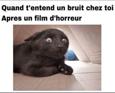 You after a horror movie - Chou - Funny Memes Images, Funny Posts, Funny Pictures, Funny Good Morning Memes, Morning Humor, Minion Humour, Coffee Quotes Funny, Disney Fun, I Love Cats