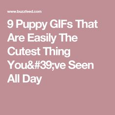 9 Puppy GIFs That Are Easily The Cutest Thing You've Seen All Day