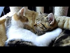 Funny Cats | How to become a good boyfriend - 12 tips from Cute Kitten Rocky. -  #animals #animal #pet #cat #cats #cute #pets #animales #tagsforlikes #catlover #funnycats Subscribe:  . Funny Cats | How to become a good boyfriend – 12 tips from Cute Kitten Rocky. Funny Cats compilation 1. Learn to hug and kiss her 2. Win her heart through dancing 3. Write poems for... - #Cats