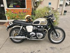 Triumph Bonneville T100, Motorcycle, Vehicles, Motorcycles, Car, Motorbikes, Choppers, Vehicle, Tools