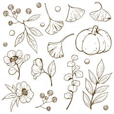 Immagine vettoriale stock 1525736048 a tema Hand Drawn Doodle Outline Accessory Autumn (royalty free) Fall Drawings, Outline Drawings, Ink Pen Drawings, Doodle Drawings, Cute Drawings, Autumn Doodles, Doodle Art For Beginners, Flower Line Drawings, Floral Doodle