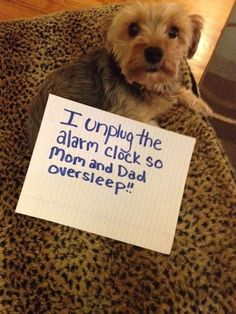 The best of dog shaming #funnydogshaming