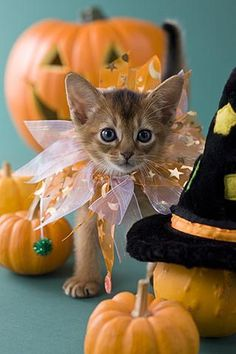 Halloween party with sparkles for kitty cat!