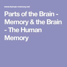 Parts of the Brain - Memory & the Brain - The Human Memory