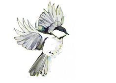 Watercolor Painting Chickadee Art Print Song Bird Blackcapped Chickadee Landing in Striking Black and White Wall Art
